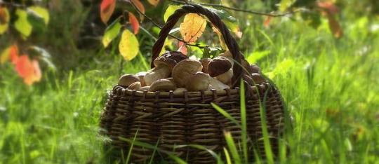 (Slovenčina) Jesenná hubačka
